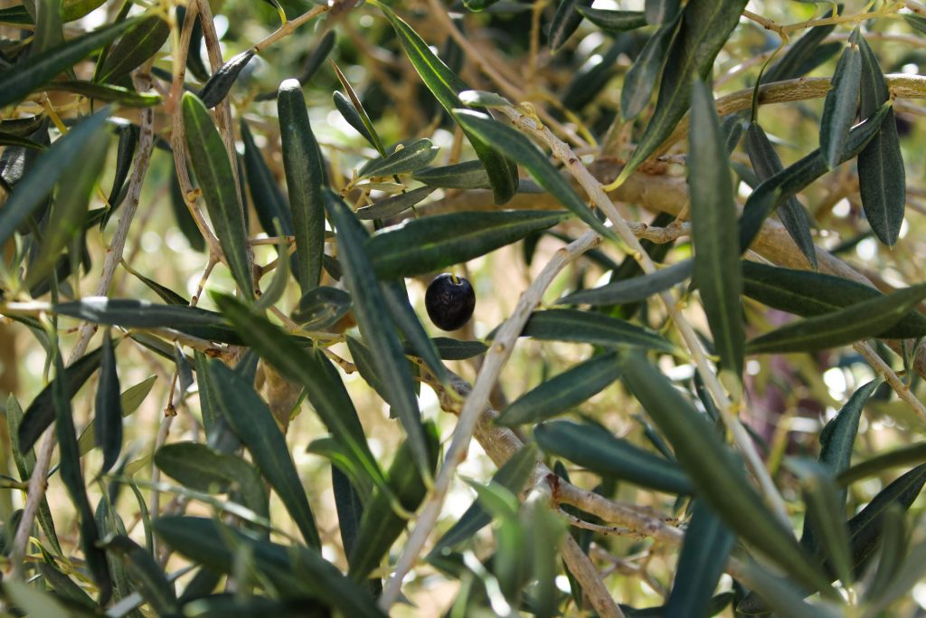 olio extravergine d'oliva benefici